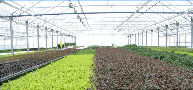 Van Senten aquatic plants nursery